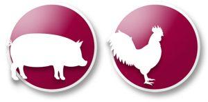 icono cerdo y pollo